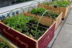 Growing veg